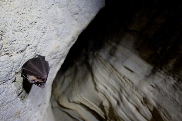 Reportage photo sur l'Inventaire des chauves-souris de Païolive