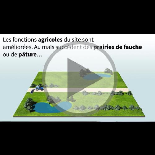 Vidéo La nouvelle vie du marais