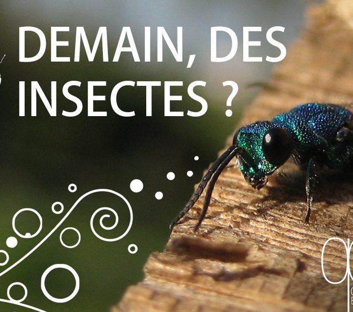 Direct live Demain des insectes ?