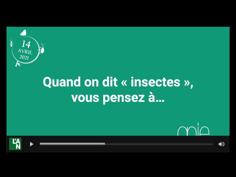 Vidéo Micro trottoir sur la perception des insectes